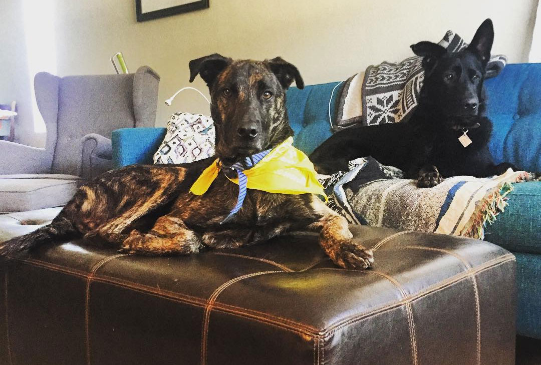 OTAT-Foster-Dogs