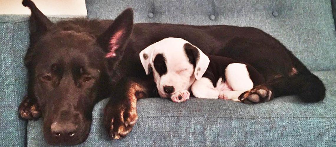 Puppy-Snuggles